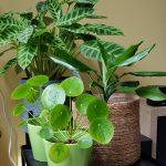 Planten clusteren